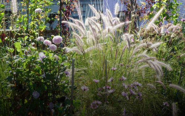 garden-at-hoax